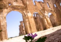 Entre tanta desolación creció una flor